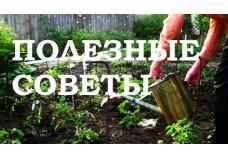 Оригинальные советы огороднику