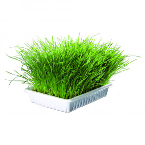 Трава для животных