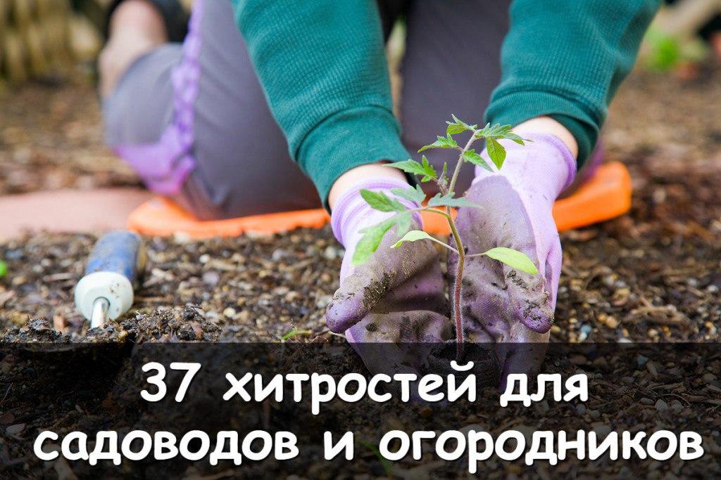 Хитрые советы для садоводов и огородников